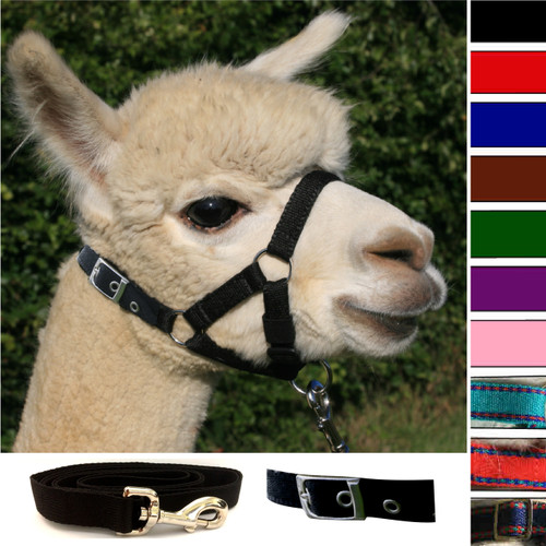 Alpaca Buckle Fastening Headcollar - With Lead - SPECIAL OFFER