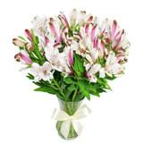 MARKET SPECIAL - Alstroemeria in Vase