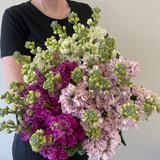 MARKET SPECIAL - Fragrant Stock in Vase
