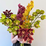 Cymbidium Orchid Giftwrap