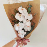 Phalaenopsis Orchid Giftwrap