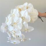 Phalaenopsis Orchid Giftwrap