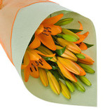 Orange Asiatic Lily Special