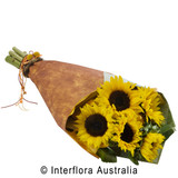 Sunflower wrap available in 2 sizes.