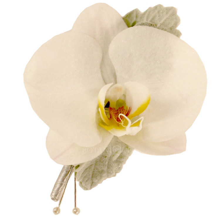 Phalaenopsis orchid buttonhole for guys.