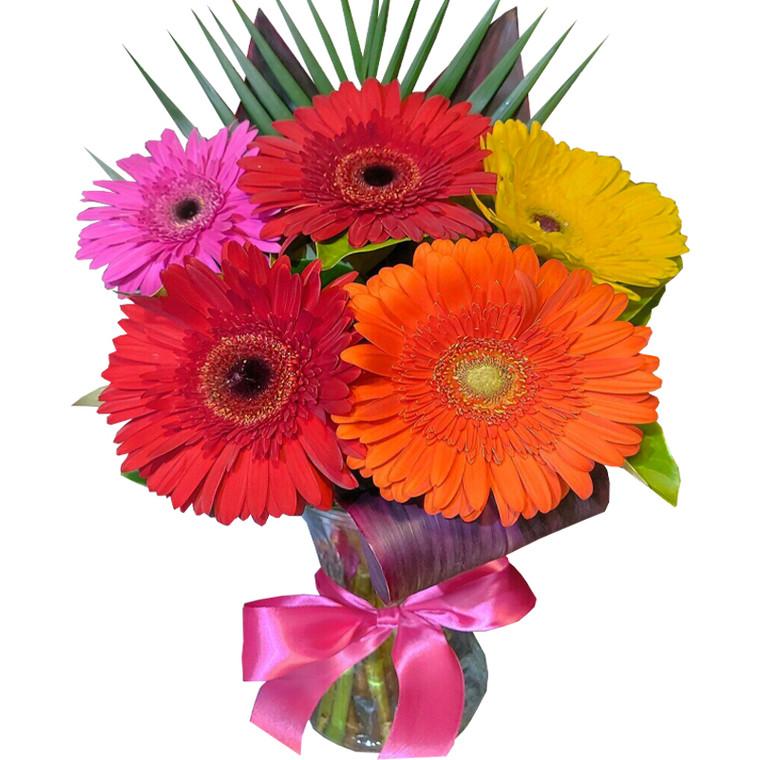 MARKET SPECIAL -  Gerberas in Vase