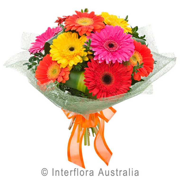 Bright Gerbera flowers Gold Coast