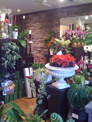 botanique-show-room-010sm.jpg