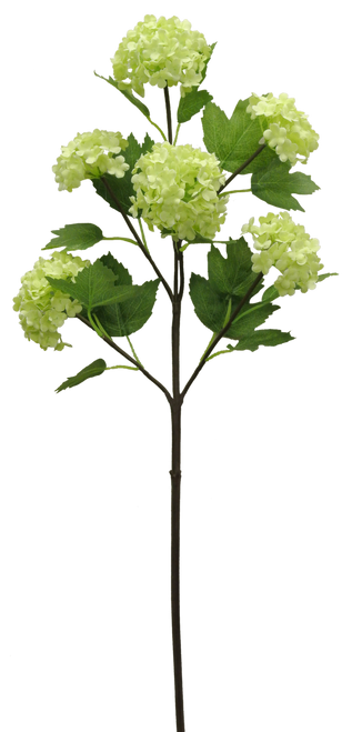 "25"" Snowball Hydrangea Spray: Green (6)"