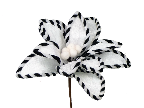 "12"" Velvet Poinsettia: White/Black"
