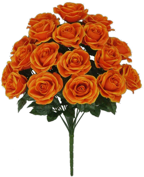"22"" Rose Bush: Orange x 18"