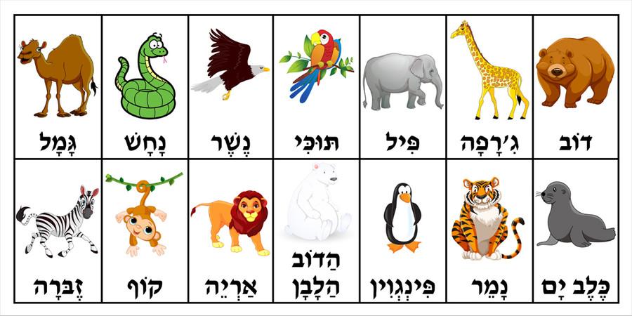 Hebrew Word Kit: ZOO