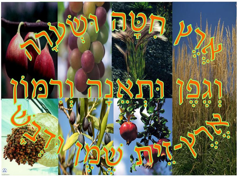 Eretz Chita Poster 2
