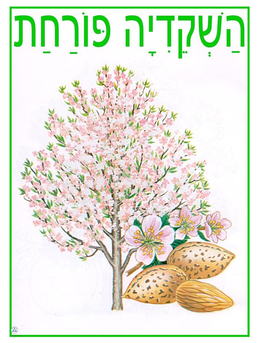 HaShekidiah Porachat Poster