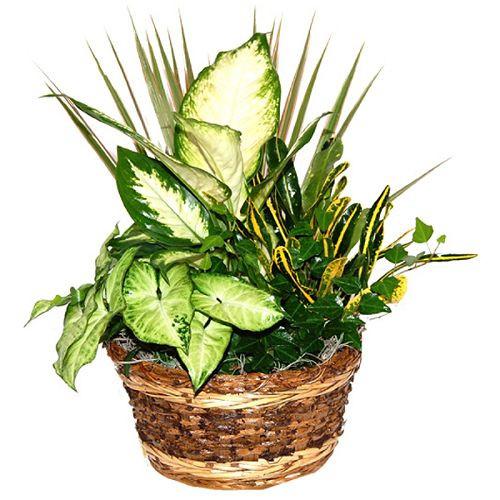 Tropical Plant Dish Garden