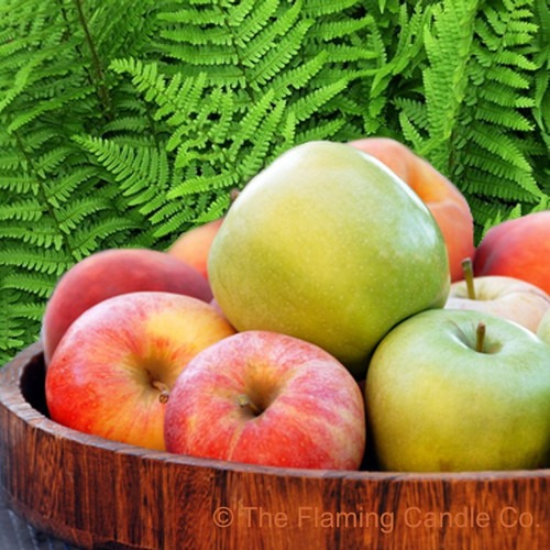 Applewood & Fern Fragrance Oil