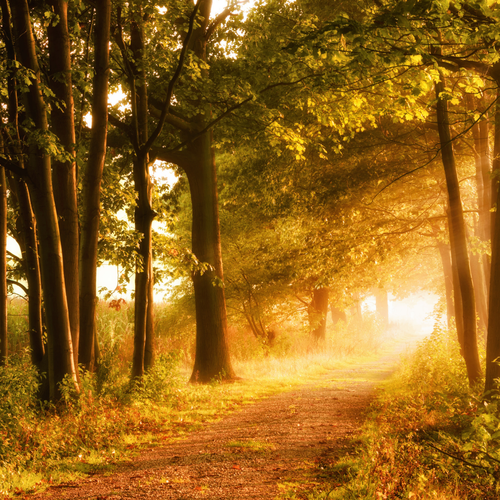 Nature Walk (Type) Fragrance Oil