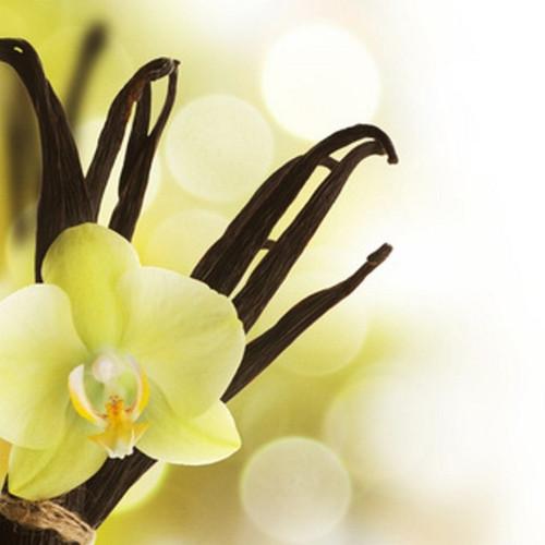 Very Vanilla Fragrance Oil