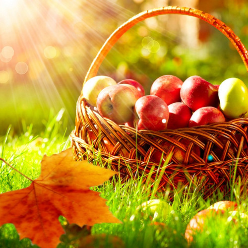 Autumn and Apple Orchard Fragrance Oil