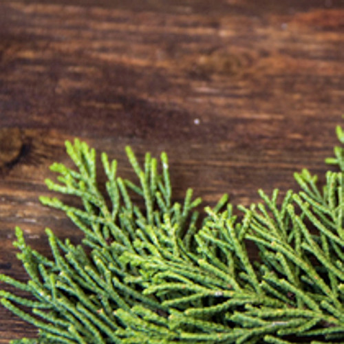Black Cedarwood & Juniper (Type) Fragrance Oil