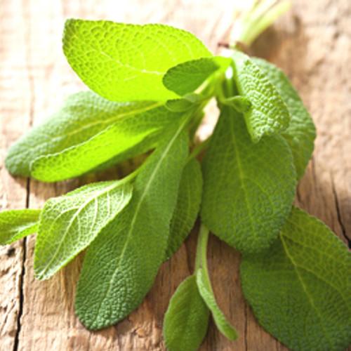 Sage Fragrance Oil
