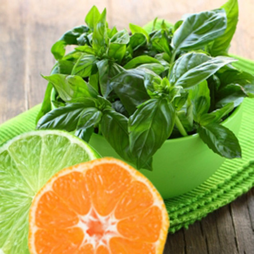 Lime Basil Mandarin Type Fragrance Oil