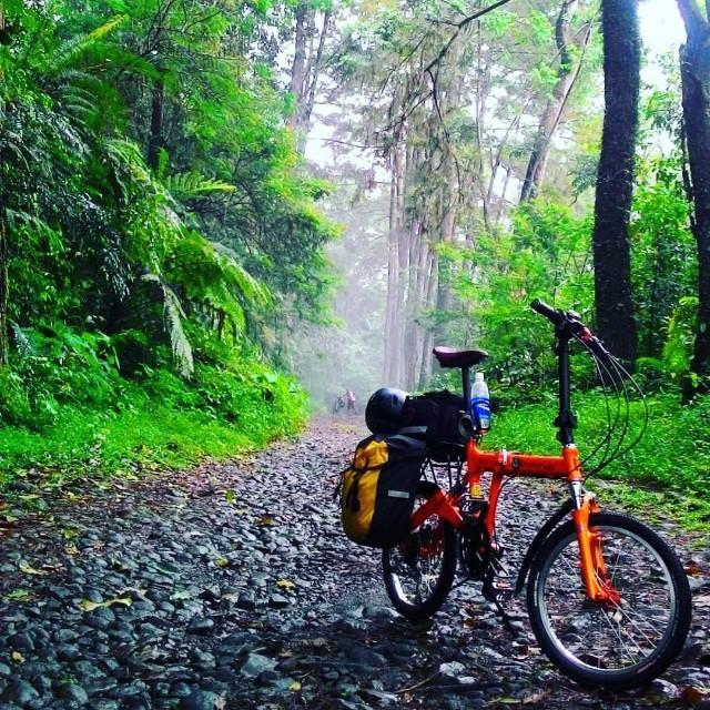 9fs folding bike rainforest