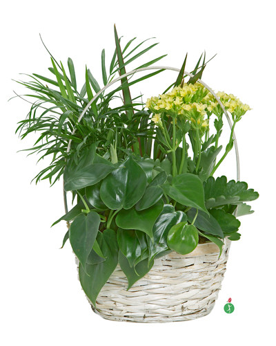 Plants in a Basket