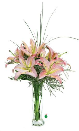 Stunning Lilies