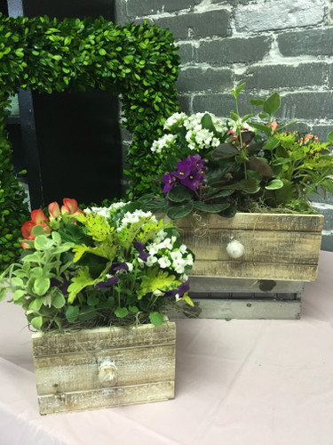 "Freshen up your spring decor with a unique 6"" x 10""drawer planter."