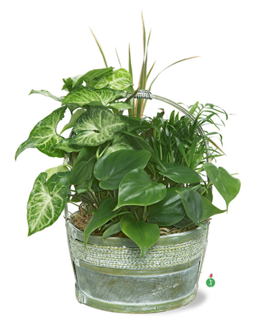 Hardy Houseplant Mix