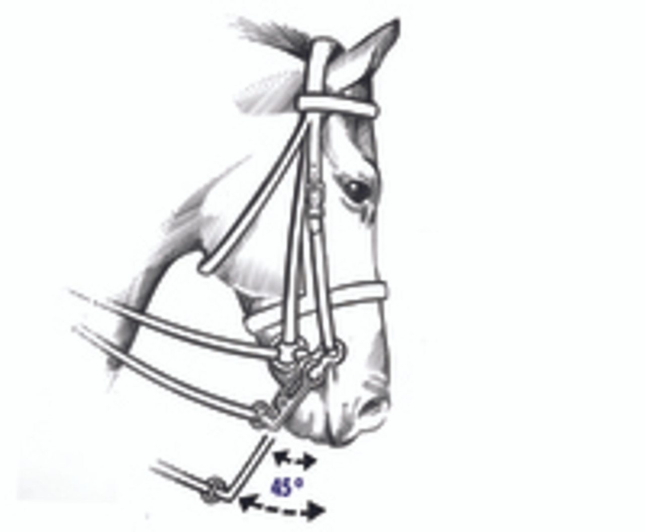 Double Bridles and the length of the Shanks