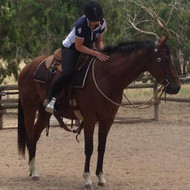 My Top 5 Bits For Starting or Breaking in Horses