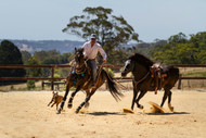 Guest Blog - What's the right bit and the right fit? By Pauly Daniels from Daniel-Tessari Horse Reflections