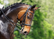 Double Trouble? Let us take the headache out of choosing a double bridle bit set!