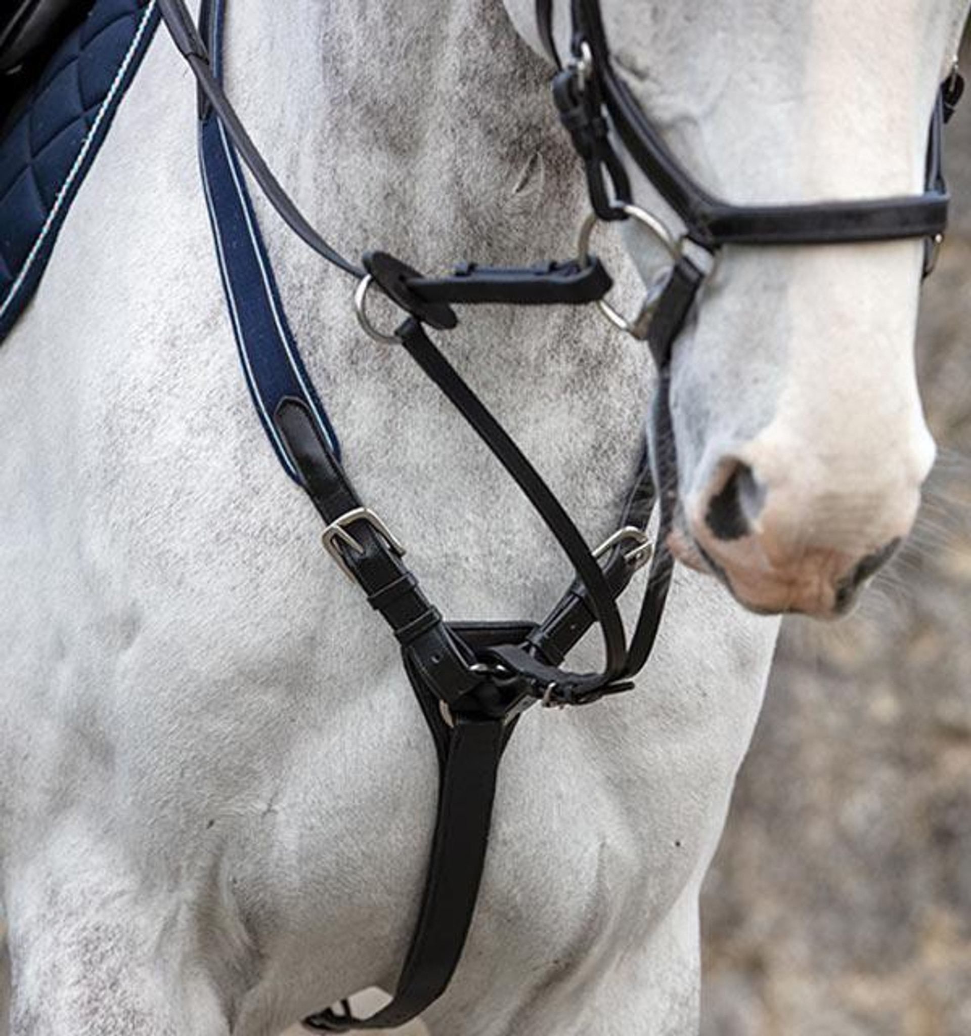 Rambo Micklem Diamante English Leather Usa Black Standard Horse Talkingbread Co Il