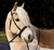 Bridle2Fit Anatomical Bitless Bridle