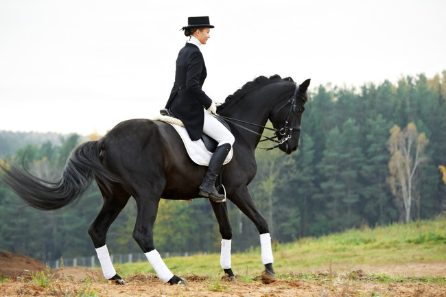 My Top 5 Bits for Dressage
