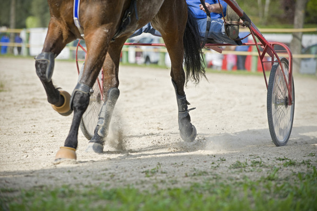 From Harness to Hack - Bitting the Standardbred After Racing