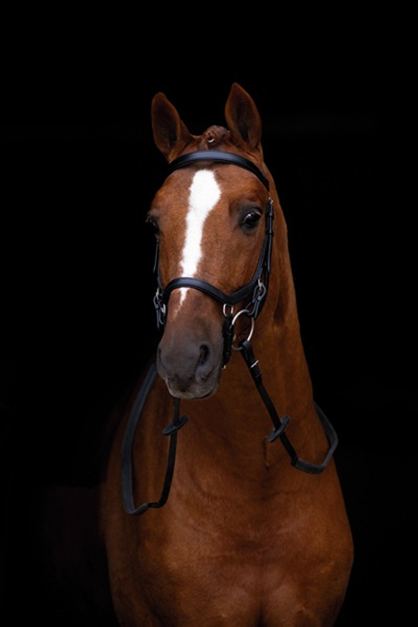 Micklem Competition Bridle in Black