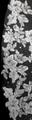 "Bella Mera Studio - (128""L) - French Alencon Lace Cathedral Wedding Veil"