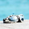 Expert Goggles Skull Print Frame/Smoke Lens with Case