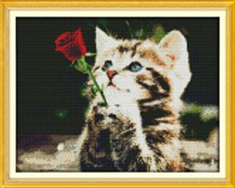 Cat with Red Rose