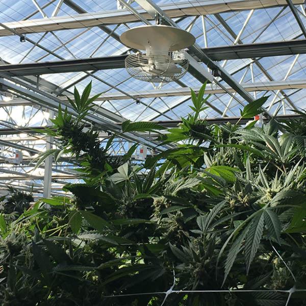 multifan-v-flofan-cannabis-cultivation-factory-fans-direct-888-849-1233.jpg