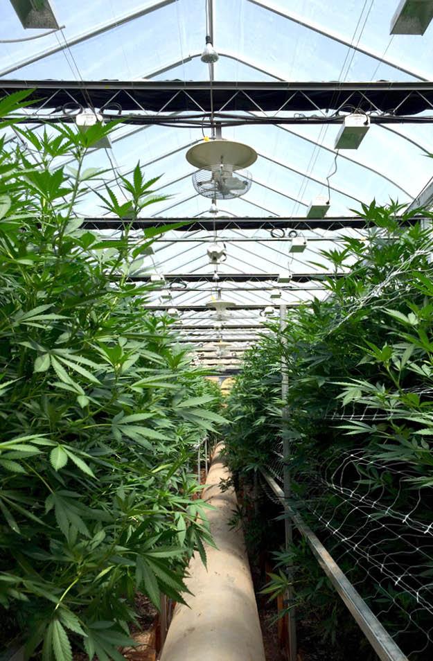 multifan-v-flofan-medicial-cannabis-cultivation-factory-fans-direct-888-849-1233.jpg
