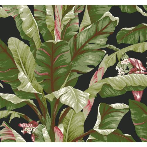 York Wallcoverings AT7071 Tropics Banana Leaf Wallpaper, Black/Green - Removable