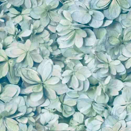 RoomMates RMK11192WP Hydrangea Peel & Stick Wallpaper Green, Blue