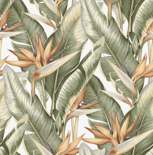 Kenneth James by Brewster PS40204 Palm Springs Arcadia Light Green Banana Leaf Wallpaper