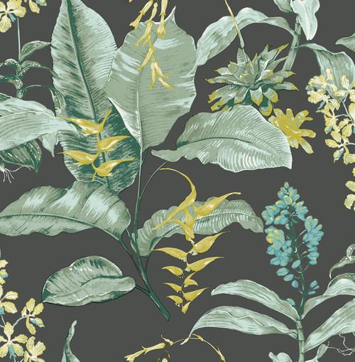 Kenneth James by Brewster PS41814 Palm Springs Maui Black Botanical Wallpaper