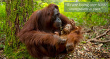 Palm Oil - Can it Really be Sustainable?
